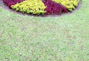 Création et entretien de jardin/espace vert à domicile