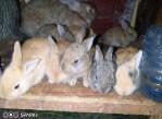 Comment faire une élevage Des lapins